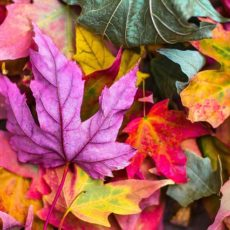 秋の不調はコレでケア!肌荒れ、鼻水、喉の痛み【基本編】