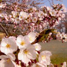 悩ましい花粉症などのアレルギー症状・・・健康を取り戻すポイントと注意点!