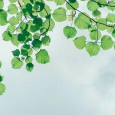 植物のエネルギーがつまったオーガニックアロマオイル。爽やかな3つの香り